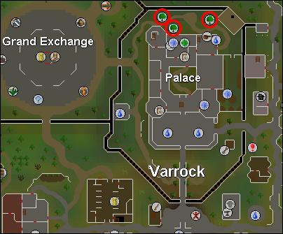 The Battle of Varrock Varrock_yews