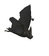 Warped bat